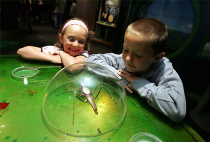 Children investigating insects at a interactive display, Conkers